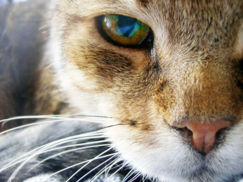 Large cat eye 99762