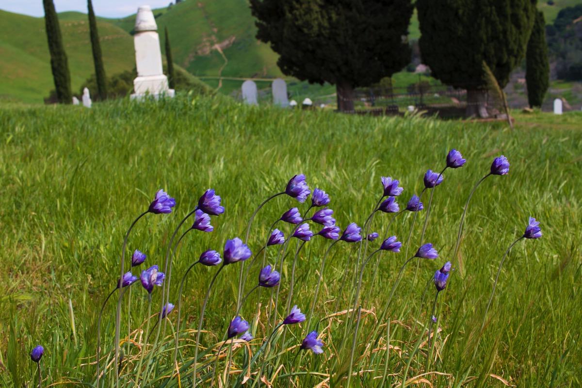 CemeteryFlowers1