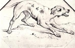 Dog 1 jpg Blog